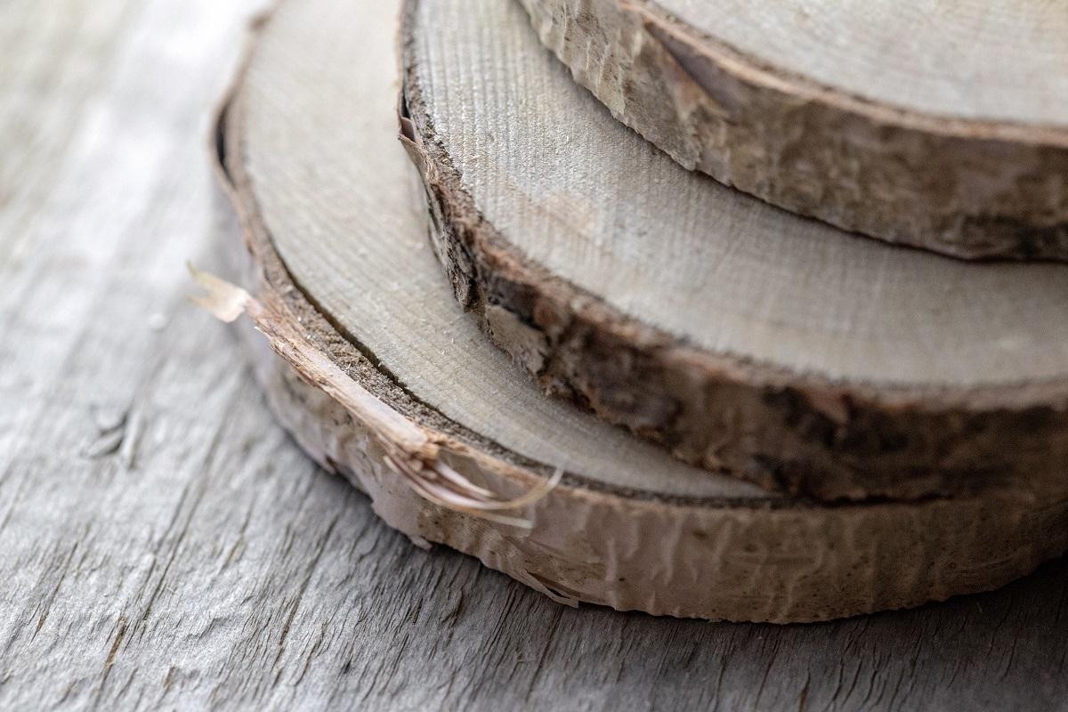 Legno di sandalo cedro tra gli elementi della famiglia olfattiva Legnosa