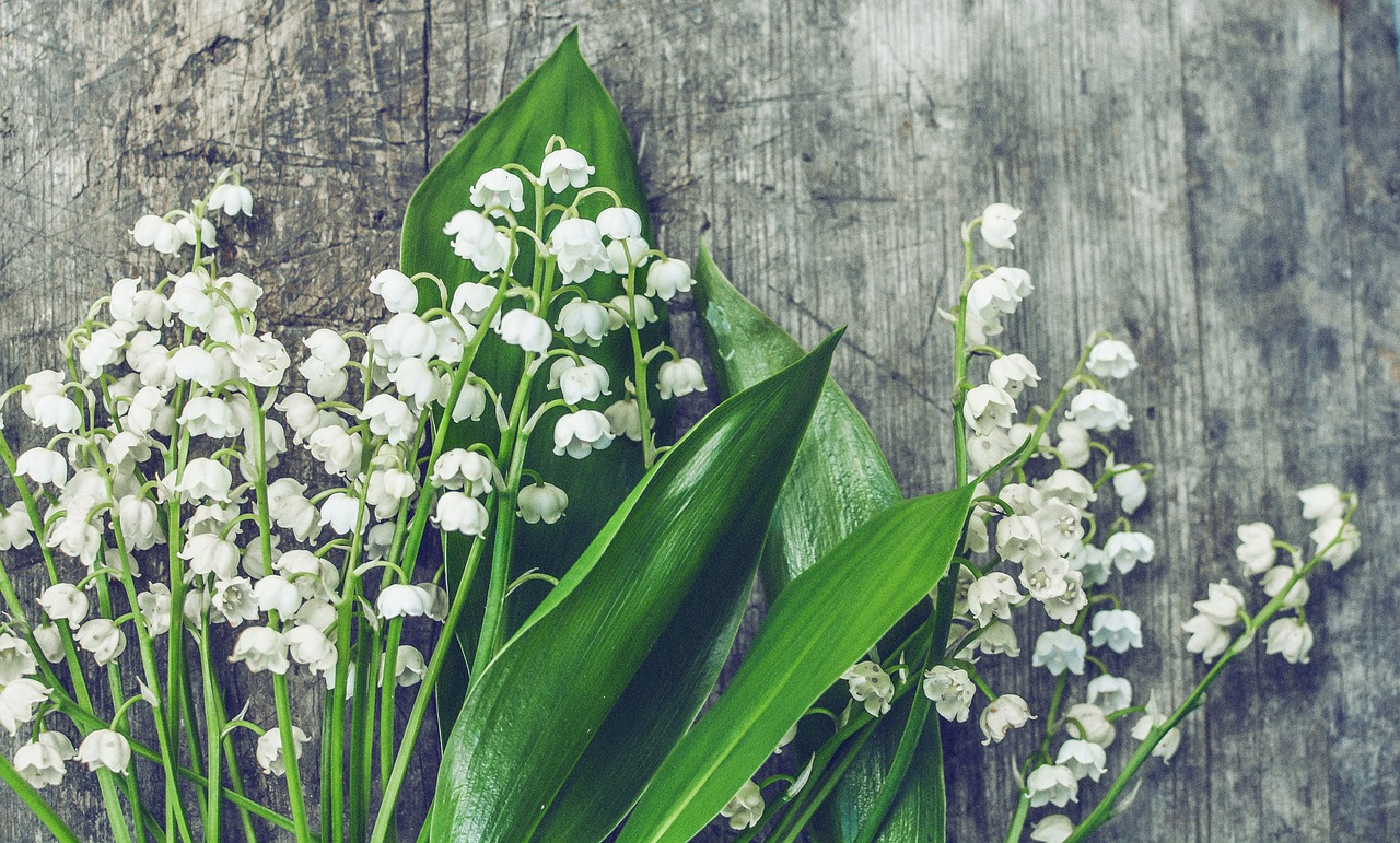 Mughetto famiglia olfattiva Floreale fiorita profumi