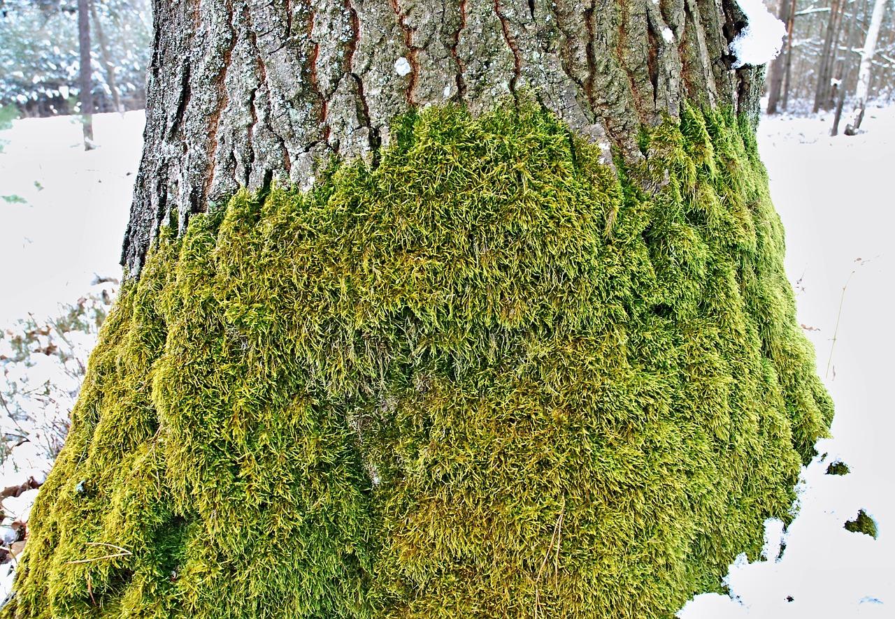 Muschio di quercia famiglia olfattiva Cyphre Fougére profumi