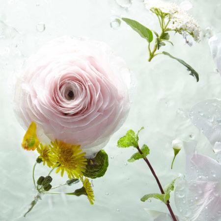 Acqua profumata alla Rosa